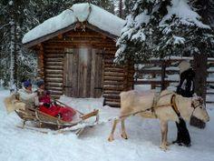 Reindeer sleigh rides at Lammintupa, near Ruka, Finland