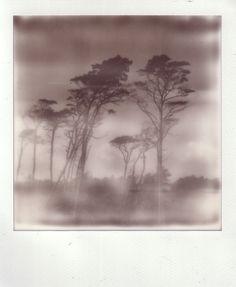 Untitled #5 Polaroids, Monochrome, Painting, Art, Art Background, Monochrome Painting, Painting Art, Kunst, Paintings
