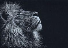 Lion by pamslaats on DeviantArt