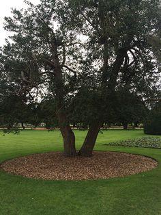 Kuorikate, kuorike. Puun koko latvuksen alueelle.