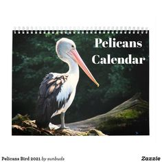 Pelicans Bird 2021 Calendar Pelican Bird, Bird Theme, 2021 Calendar, Anniversary Quotes, Sea Birds, Love Messages, Holidays And Events, Gifts For Family, Great Gifts
