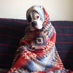 Babushka Dog will sit in the corner and make you feel guilty.
