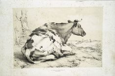 "Antique lithograph, ""Cow"" by Thomas Sidney Cooper, 1803-1902."