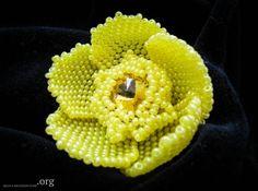 Желтая кувшинка / Цветы / Biserok.org