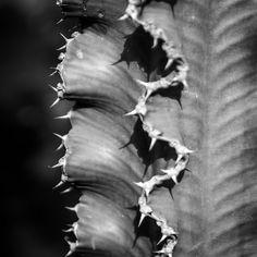#Cactus Garden, Lanzarote, Canary Islands - www.gdecooman.fr portfolio, cours et stages photo à Lille, visites guidées de Lille