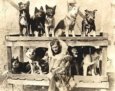 Gunnar Kaasen, musher of Balto's team, along with nine of the thirteen members of the team.  Balto is second from left in the upper tier of the rack behind Kaasen, and Fox third from left (next to Balto).