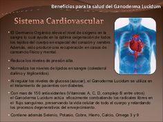 Beneficios Para La Salud Del Ganoderma Lucidum Anorexia, Ayurveda, Videos, Health