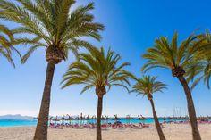 Mit dem Begriff Mallorca verbinden viele Meer, Natur, Sonne, Strand, Urlaub, mediterranes Ambiente,  Aus diesem Grunde suchen viele Mallorca-Liebhaber auch Ihre zukünftige Traumimmobilie möglichst dicht am Meer. Und insbesondere hier bei uns im Südwesten von Mallorca stimmen zusätzlich das Umfeld, die Infrastruktur, die Erreichbarkeit und die Sicherheit. Die Nachhaltigkeit einer finanziellen Investition ist hier gewährleistet, das zeigt die Erfahrung .  www.casanova-immobilienmallorca.de