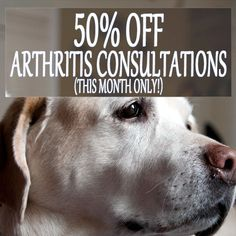 50% Off Arthritis Consultations (this June only!) Because winter often marks the onset of or osteoarthritis in dogs and cats, Vet Hospital Port Shepstone offers half price consultation fees to have your pet checked out for the condition. Osteoarthritis is a condition that can be successfully managed with the right knowledge and advice. If you... http://www.vet-portshepstone.co.za/50-off-arthritis-consultations-this-june-only/