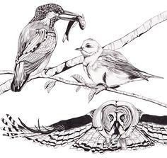 illustrations - jennivare