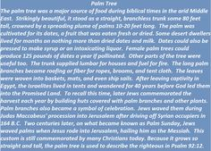 Palm Tree in biblical times