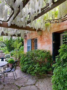 Wisteria hanging from pergola - <3 wisteria