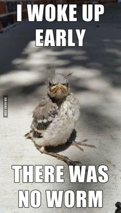 Funny pictures Good morning - The early bird catches the worm - Tier Witze - Lustige Tiere - humor Funny Animal Memes, Animal Quotes, Funny Animal Pictures, Funny Animals, Cute Animals, Animal Humor, Bird Pictures, Angry Animals, Fail Pictures