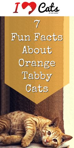 There's more than just one reason why ginger tabbies are so special!