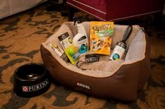 The Cheshire is a pet-friendly hotel, and our commitment to our guests extends to their four-legged companions. Simply let us know you'll be traveling with a pet and our Director of Pet Relations will furnish your Specially Designated Pet Friendly guest room with amenities provided by Nestle Purina.