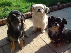 Roly , Dillon & Bonnie  - I own three dogs & as soon as they hear me open a bag of Sea Jerky Chunky Cubes they all come running . They all sit looking at me in dribbly anticipation . Then when I offer them a treat they snatch it , run quickly to a safe spot & all I can hear is loud lip smacking crunching sounds . The looks on their faces makes me laugh & I know how much they`re loving their jerky treats . Omega 3 Fish Oil, Cubes, Tasty, Treats, Sea, Running, Dogs, Nature, Sweet Like Candy