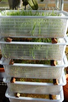 Chicken Coop - Love this system using Dollar store trays and wood pieces in-between! They serve the top tray each day start a new one on the bottom. Building a chicken coop does not have to be tricky nor does it have to set you back a ton of scratch.