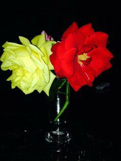 #Rose spensierate :-)