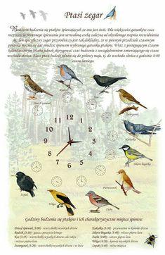 Animals And Pets, Cute Animals, Polish Language, Nature Journal, Science Art, Kids Education, Travel With Kids, Teaching Kids, Montessori