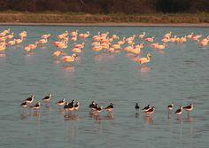 Lagunas Saladas del Campo María. Salty Lagoons of Campo María Llegar a las Lagunas Saladas de Campo María significa aventurarse en un ecos...
