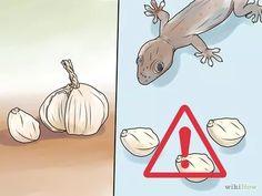 Imagem intitulada Get Rid of Common House Geckos Step 5