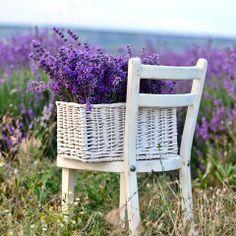 Ideen zum Nachpflanzen - Beet mit Gräsern - [LIVING AT HOME]