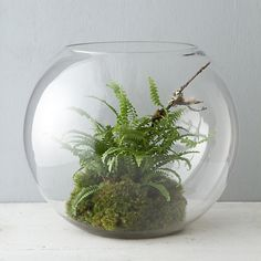A terrarium made out of a fishbowl. I wonder if we could find a plant that works underwater (obviously not impossible), we could make an aquarium out of it instead? Who knows! :D