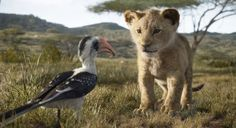First Full-Length 'The Lion King' Trailer Tells the Story of Young Simba: The film stars Donald Glover, Beyoncé, Seth Rogen and more. Lion King Remake, Watch The Lion King, Lion King Movie, Lion King Simba, Baby Simba, John Oliver, Donald Glover, Anne Sila, Live Action