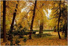 Jardín de Aranjuez