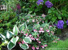 Small Shade Gardens | Shade & Small Gardens / One of my shady garden areas, Hydrangeas ...