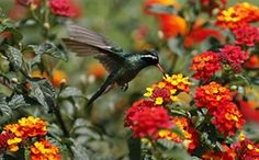 Week in Wildlife: A hummingbird hovers over flowers as it collects nectar in Mexico City