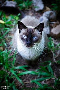Gorgeous cat! looks like Mr. Dudley