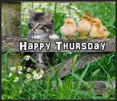 Good morning sister and all,have a happy day,God bless xxx take care and keep safe❤❤❤☕🍩 Thursday Greetings, Thankful Thursday, Happy Thursday, Happy Monday, Thursday Humor, Thursday Quotes, Its Friday Quotes, Good Morning Sister, Good Morning Thursday