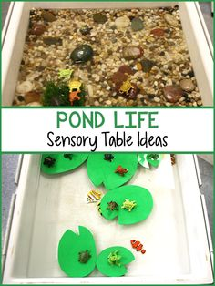 These two sensory table ideas are great to set up during a Pond Life unit. Children can play in the water in the sensory table while also exploring a model pond habitat and a float Preschool Lesson Plans, Preschool Themes, Pond Habitat, Pond Crafts, Pond Animals, Water Animals, Fish Activities, Nature Activities, Sensory Table