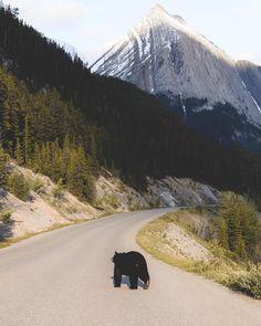 "Medicine Lake (Jasper, Alberta) by Zackk Barazowski (@zackkcore) on Instagram: ""Luck is what happens when preparation meets opportunity."""