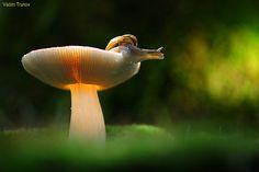 Snail by Vadim Trunov