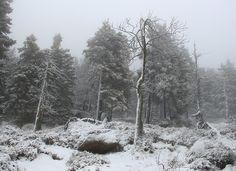 Harz #Schnee