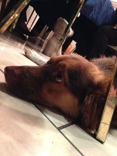 Pretty dog <3