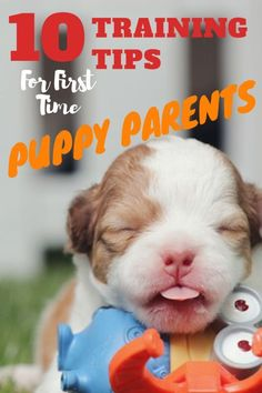 Dog Training Tips for First Time Puppy Parents