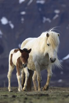 Horse and a Pony by jonrrr, via Flickr
