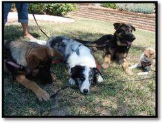 Capturing Calmness- how to train calmness in dogs- dog training (Emily Larlham)