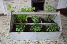 Easy Countertop Herb