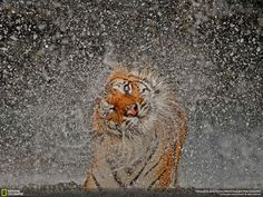 Nat Geo's 2012 Photography Competition: Grand-Prize Winner & Winner of the Nature Category | Photo and caption by Ashley Vincent
