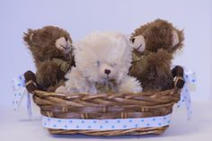 Teddy bears in the basket