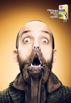 1/3 gráficas de Pedigree Dentastix Fresh para promocionar sus producto que refresca el aliento de los perros. Mezclar los rostros de personas y animales fue la #solucion.