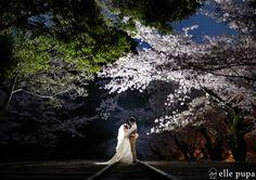 #ウェディングフォトアワード2014金賞 #桜 #ナイトフォト #インクライン