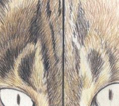 Drawing Fur with Coloured Pencils