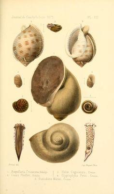t 20 (1872) - Journal de conchyliologie. - Biodiversity Heritage Library