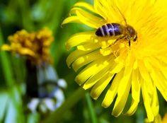 PRANOSTIKA NA NEDEĽU 19.3.: Koľko dní pred Jozefom vyletia včely, toľko týždňov bude chladno