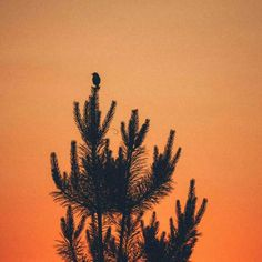 Small bird on a tree